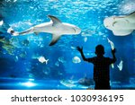 kid watching the shoal of fish... | Shutterstock . vector #1030936195