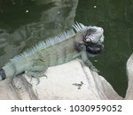 Small photo of Alligator intimidating from a rock