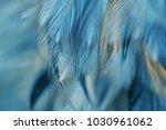 image nature art of wings bird... | Shutterstock . vector #1030961062