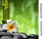 frangipani and bamboo on the... | Shutterstock . vector #1031009002