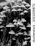 The World Of Mushrooms.