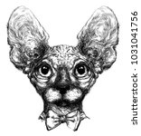 hand drawn hairless cat | Shutterstock .eps vector #1031041756