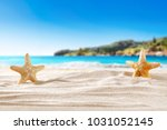 shell on sand and free space... | Shutterstock . vector #1031052145