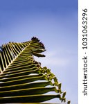 Small photo of minimalism close up of palm tree leaf malformation from growth defect