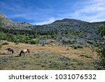 wild west mood in europe  ... | Shutterstock . vector #1031076532