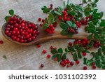 berries of red lingonberry in a ... | Shutterstock . vector #1031102392