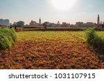 farms located at al dahab...   Shutterstock . vector #1031107915