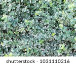 the nature grass background and ... | Shutterstock . vector #1031110216