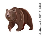 Brown Bear. Vector Illustratio...
