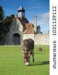 herd of free roaming semi feral ...   Shutterstock . vector #1031139112