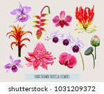 beautiful hand drawn botanical... | Shutterstock .eps vector #1031209372