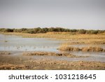 donana national park in huelva... | Shutterstock . vector #1031218645