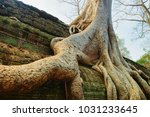 tree roots at ta prohm temple... | Shutterstock . vector #1031233645