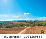 dry vineyard plantation | Shutterstock . vector #1031269666