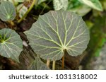 close up of green leave plant.... | Shutterstock . vector #1031318002