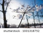 Frozen Flower  Branch And Plan...