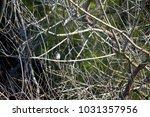 dainty chirpy  little ... | Shutterstock . vector #1031357956