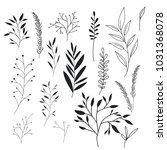 leafs plant set vintage icons | Shutterstock .eps vector #1031368078