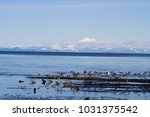 Small photo of Birds abound at low tide on a sunny day near the Kline Spit.