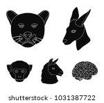kangaroos  llama  monkey ...   Shutterstock .eps vector #1031387722