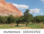 apricot orchard in fruita ... | Shutterstock . vector #1031421922