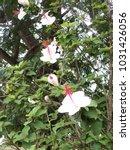 hawaiian flowers on kauai ...   Shutterstock . vector #1031426056