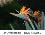 hawaiian flowers on kauai ...   Shutterstock . vector #1031426062