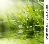 water drops on the green grass... | Shutterstock . vector #103150286