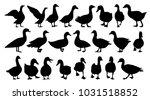 silhouette goose  duck set | Shutterstock .eps vector #1031518852