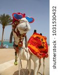 funny camel with sunglasses... | Shutterstock . vector #1031530432