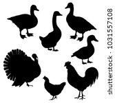 farm birds. set of vector black ... | Shutterstock .eps vector #1031557108