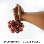 the chef's hand holds a... | Shutterstock . vector #1031559652