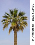 palm tree isolated against a... | Shutterstock . vector #1031563492