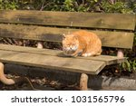 stray cats are very cute | Shutterstock . vector #1031565796