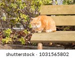 stray cats are very cute | Shutterstock . vector #1031565802