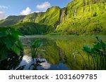 lush forest in the po o da... | Shutterstock . vector #1031609785