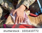 collection of a saiga blood... | Shutterstock . vector #1031610772