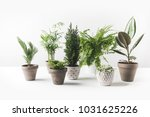 close up view of various...   Shutterstock . vector #1031625226