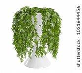 decorative climbing plant... | Shutterstock . vector #1031644456