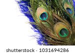 carnival peacock feathers.  | Shutterstock . vector #1031694286