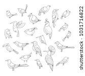 birds set. lined raster... | Shutterstock . vector #1031716822
