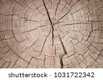 background texture of a tree... | Shutterstock . vector #1031722342