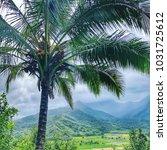 hawaii palm tree kauai    Shutterstock . vector #1031725612