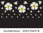 frangipani  plumeria   white...   Shutterstock .eps vector #1031746576
