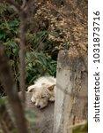 Small photo of Sleeping wild doggo