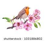 bird in cherry  apple flowers.... | Shutterstock . vector #1031886802
