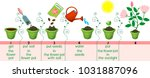 instructions on how to plant... | Shutterstock .eps vector #1031887096