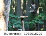 bird frozen whilst landing    Shutterstock . vector #1032018202