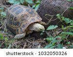 turtle in nature thailand | Shutterstock . vector #1032050326