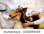 group of veterinarian chech... | Shutterstock . vector #1032094435